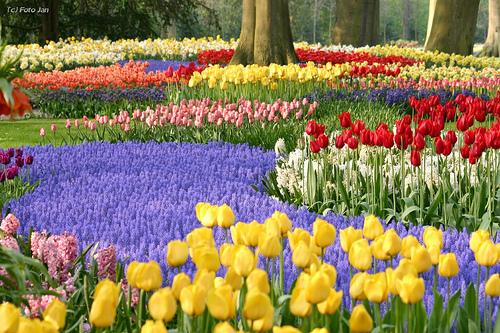 Los tulipanes y la burbuja especulativa