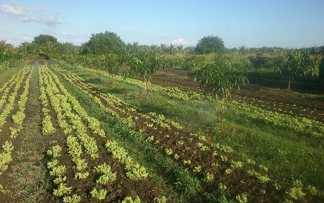 Los agricultores verán ampliadas sus ayudas por el veto ruso